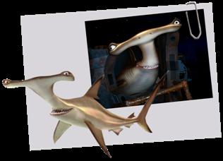 Personnages disney o l 39 enclume le monde de nemo - Requin enclume ...